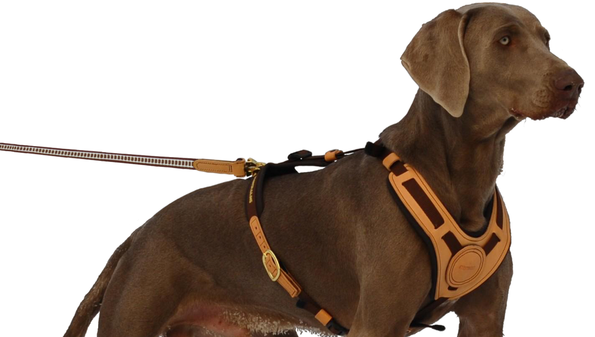 "Harness ""Mantrailing"" on the dog"